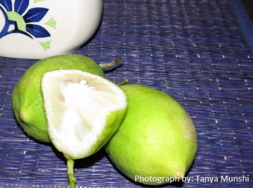 Gondhoraj lemon_by tanya munshi