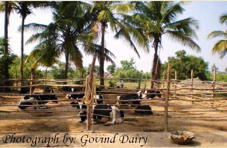 Govind Dairy The Organic Milk Farm Tanya Munshi S The Lifestyle Portal