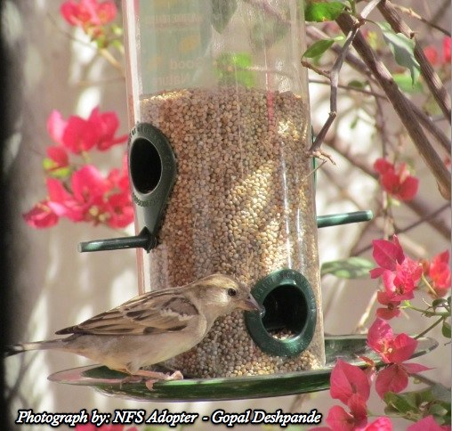 Give away bird feeders as a return gift on birthday parties. Photo credit: Nature Forever Society
