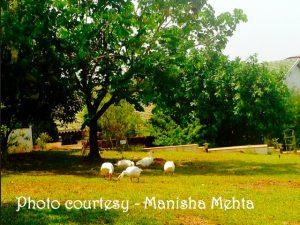 Fern Samali_manisha mehta