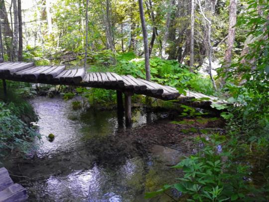 Wooden trail to paradise. Photo courtesy: Dr Sunita Rajani