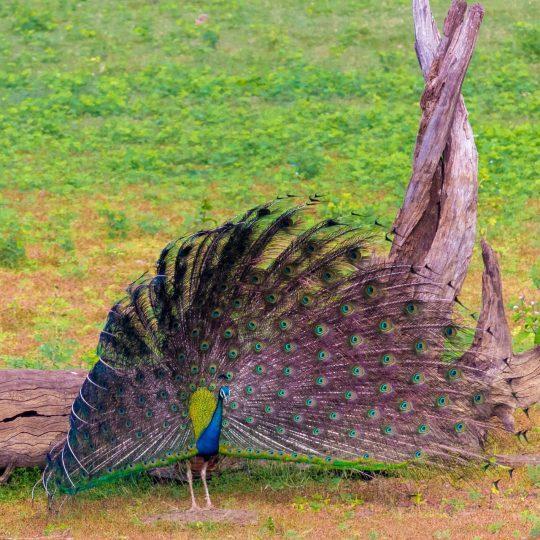 The birds of Nawabganj. Photo credit: Aditya Narayanan