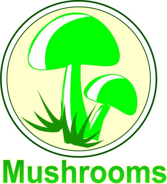 Quality Mushrooms, Pune